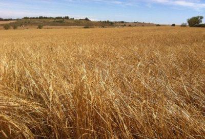 proveedores grano ecológico